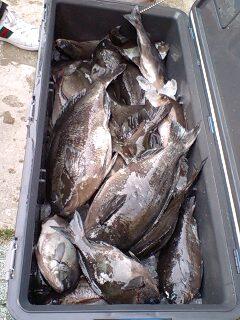 4月6日伊豆、御子元島での釣果です。