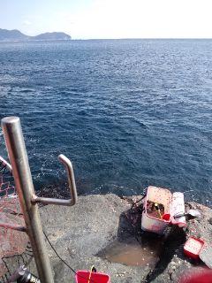 四国ローカル、スワンテレビ撮影イン高知県鵜来島。